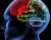 Gehirn durch Lesen unglaublich formbar