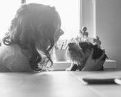 tiergestützte Therapie Lerntherapie LRS Legasthenie dyskalkulie hund kind by steffi atze